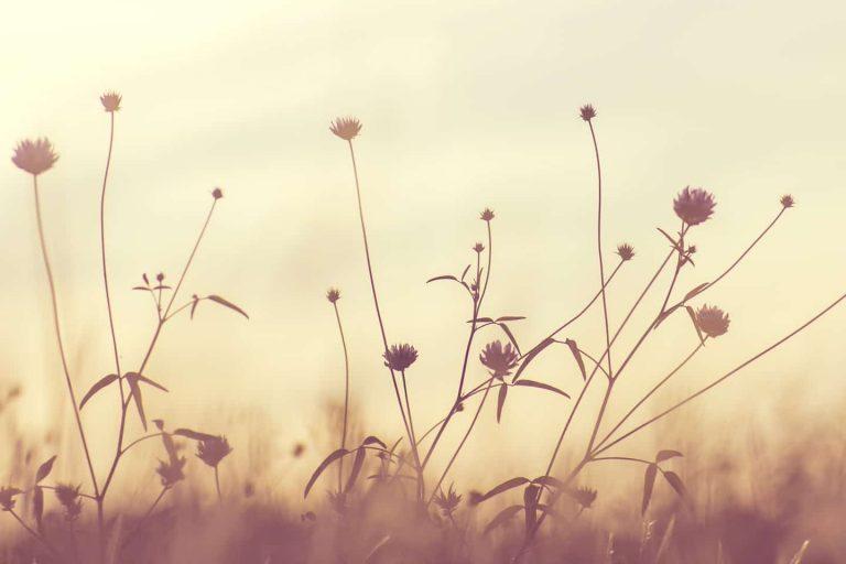 A la découverte des Fleurs de Bach