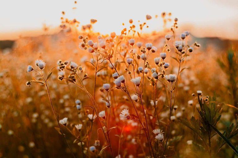 Incertitude & Covid-19: Y faire face avec la   Florithérapie