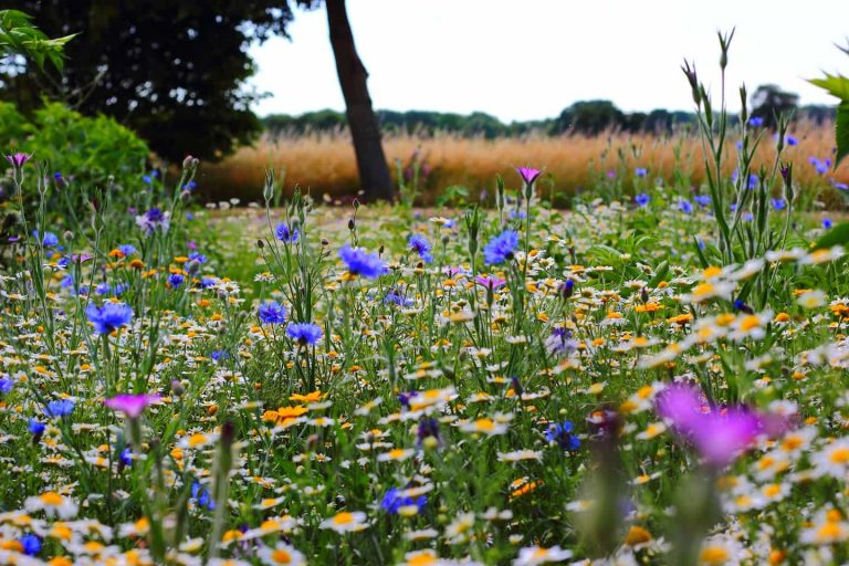 Allergies saisonnières et Naturopathie: des solutions naturelles.